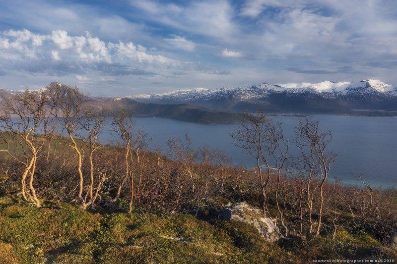 норвегия, европа, лофотены, сенья, норвежское, арктический, пляж, красивые, красота, синий, рыбалка, фьорды, острова, пейзаж, горы, природа, нордический, север, северо-восточный, скандинавия, пейзажи, живописные, море, небо, лето, туризм, путешествия Норвегия. Остров Senja. На склонах у деревни Skalandphoto preview