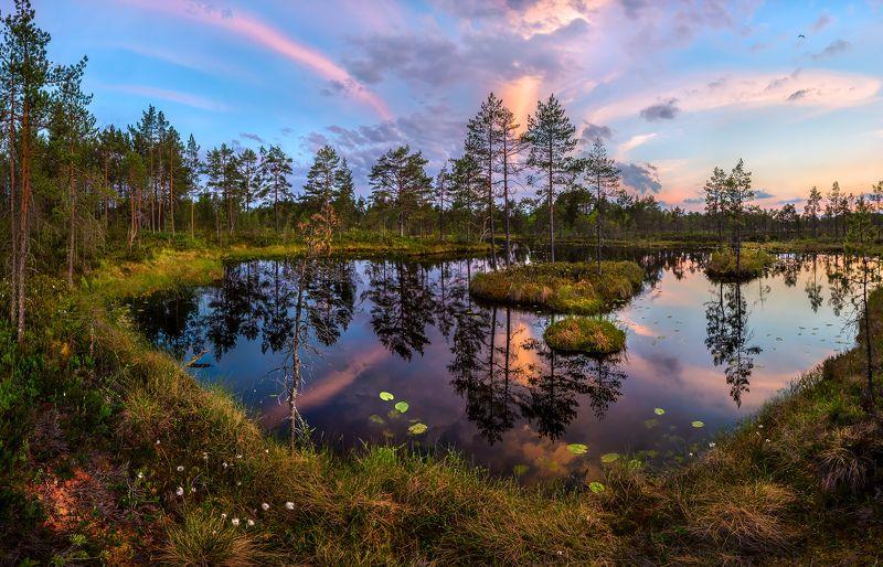 ленинградская область, озеро, кувшинки, закат, берег, сосна, фотопроект, остров, лето, Летние сумерки.photo preview