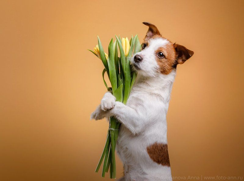 собака, 8 марта, весна, студия, мило С праздником)photo preview