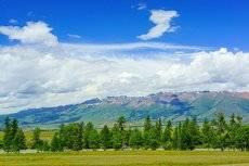 В Курайской горной котловине с видом на Курайский хребет.