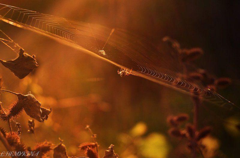 Медовая осеньphoto preview