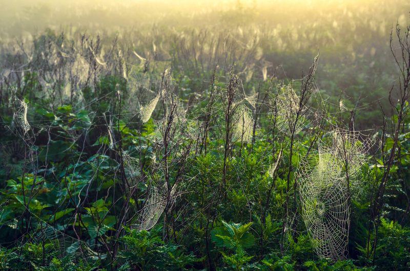 Паутины, Рассвет, Пауки, Приморье, Приморский край Страна пауковphoto preview