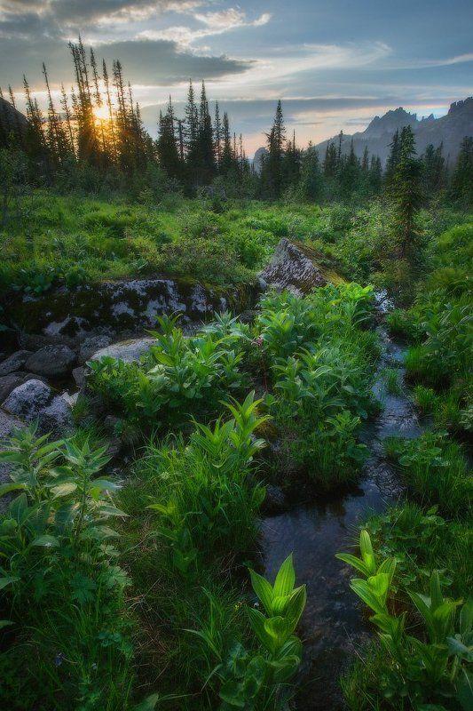 ергаки, горы, саяны, лето, сибирь У таежного ручьяphoto preview
