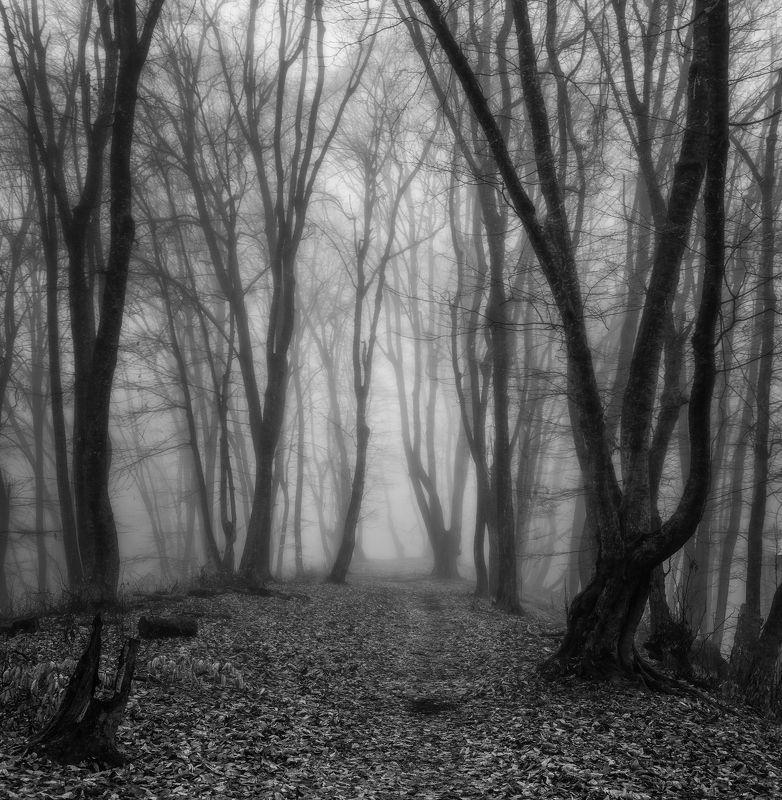Без красок и в туманеphoto preview