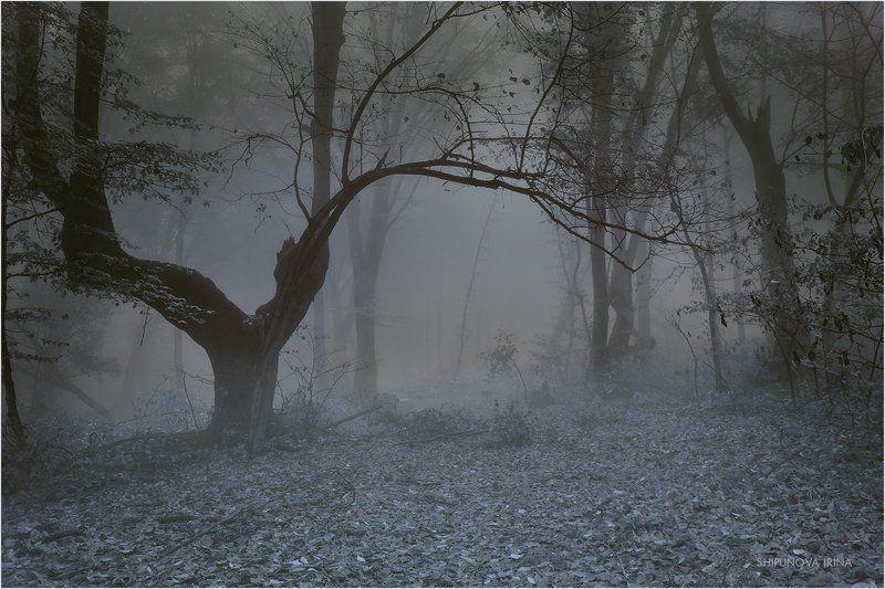 Сказочный лес 10photo preview