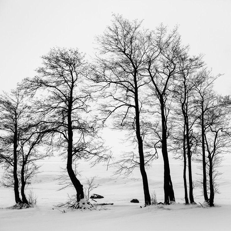 природа, силуэт Зима - Летоphoto preview