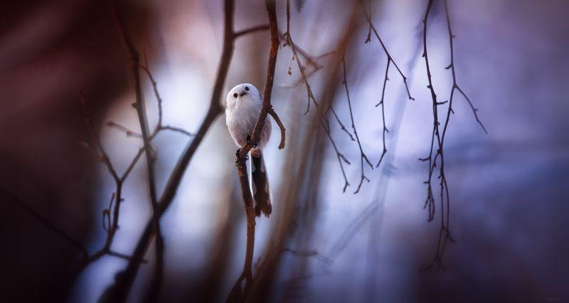 природа, лес, животные, птицы ... маленькое привидение :)photo preview