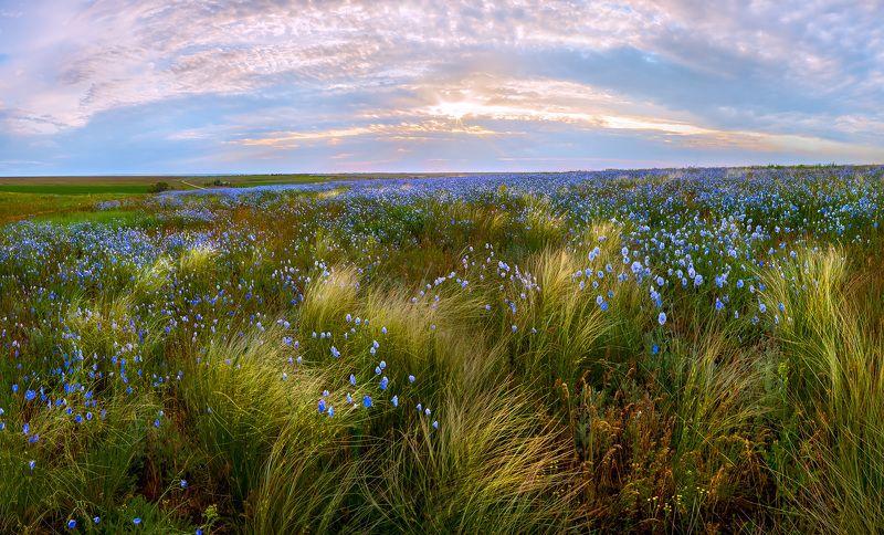 ковыль, степь, весна, ставропольский край, лён, рассвет, простор. Весенняя степь.photo preview