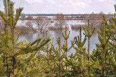 На берегу реки Сож (Разлив) 3