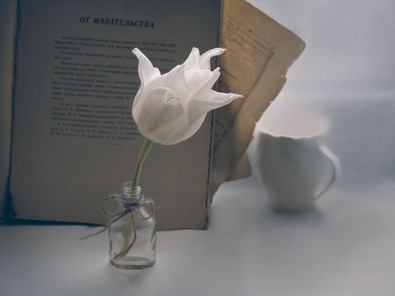 тюльпан, бутылочка, нитка, бантик, книга, страницы, чашка, подоконник, натюрморт, весна, цветок, растение с белым тюльпаном 2photo preview