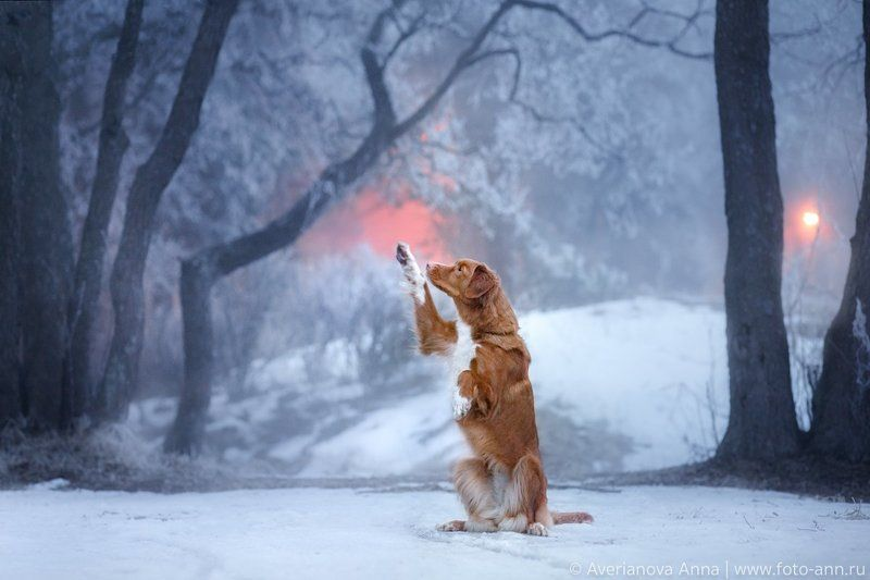 собака, природа, зима, туман Туман и иней photo preview