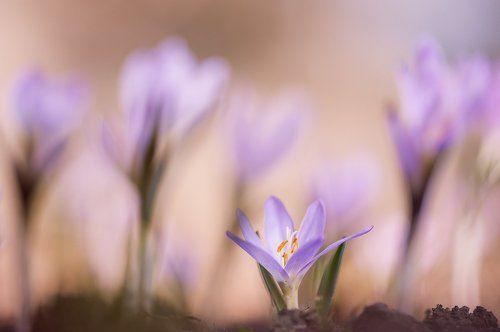 ...нежность весенней поры...