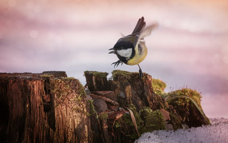 природа, лес, животные, птицы ... сейчас кааак топну :)photo preview
