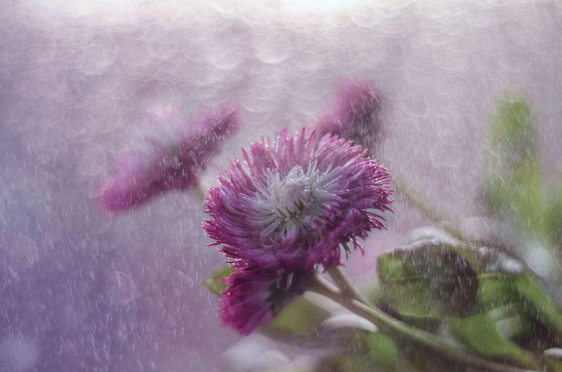 Весенний дождьphoto preview