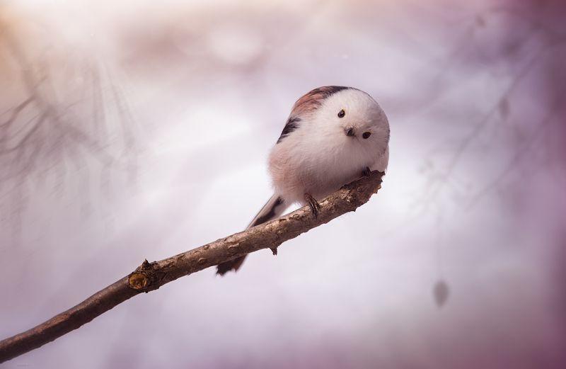 природа, лес, животные, птицы Ну что ... ? Будем знакомиться ?photo preview