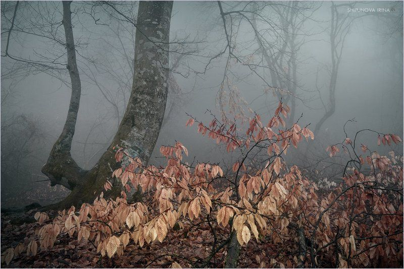 Про туманы Кавказа 4photo preview