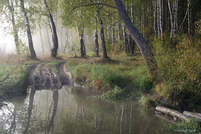 утро туман берёзы вода пейзаж У водыphoto preview