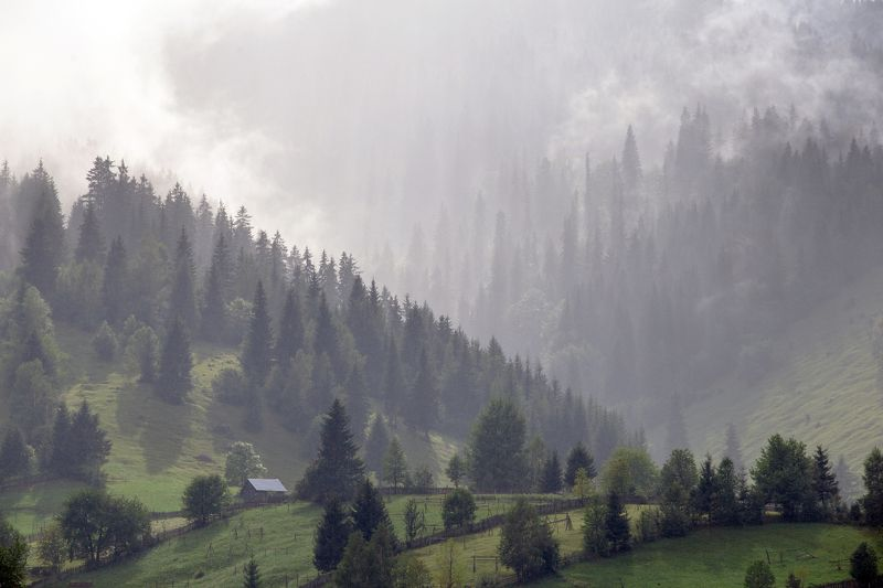 romania,trees,nature,mist,land,bucovina, My beautiful Bucovinaphoto preview