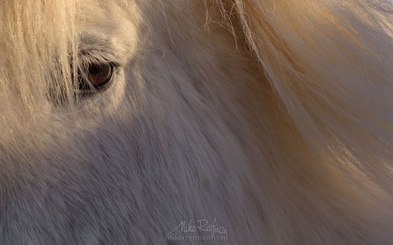 horse,  animal eye, animal hair, close-up, color image, icelandic horse, mammal, one animal, outdoors Прекрасная Блондинкаphoto preview