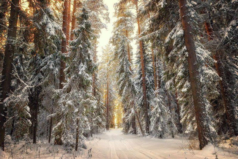 Под занавес заката... Кировская область. Россия. Under the sunset curtain ... Kirov region. Russia.photo preview