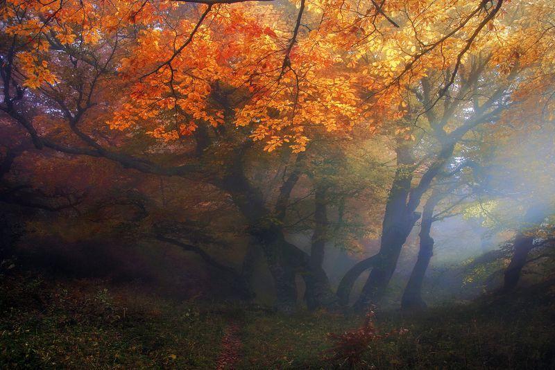 Осенний багрянецphoto preview