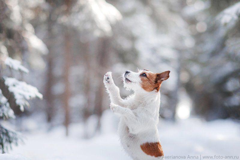 собака, зима, природа Дай вкусняшку =)photo preview