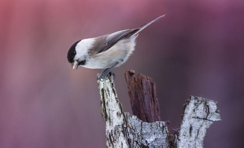 природа, лес, животные, птицы Моросит по весеннемуphoto preview