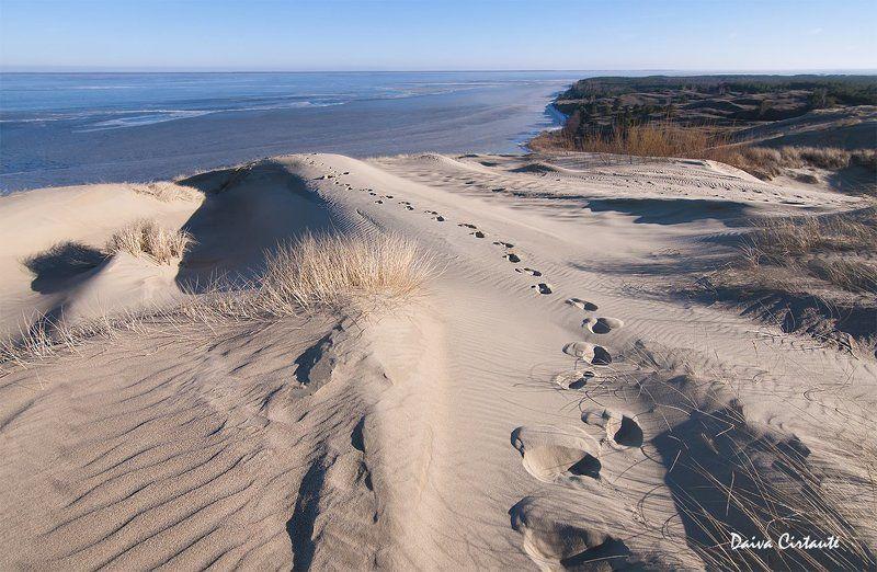 dunes,dead dunes,sand,white dunes Dead dunesphoto preview