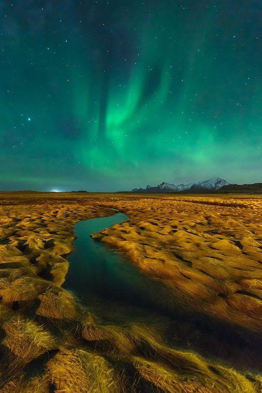 Arctic flamesphoto preview