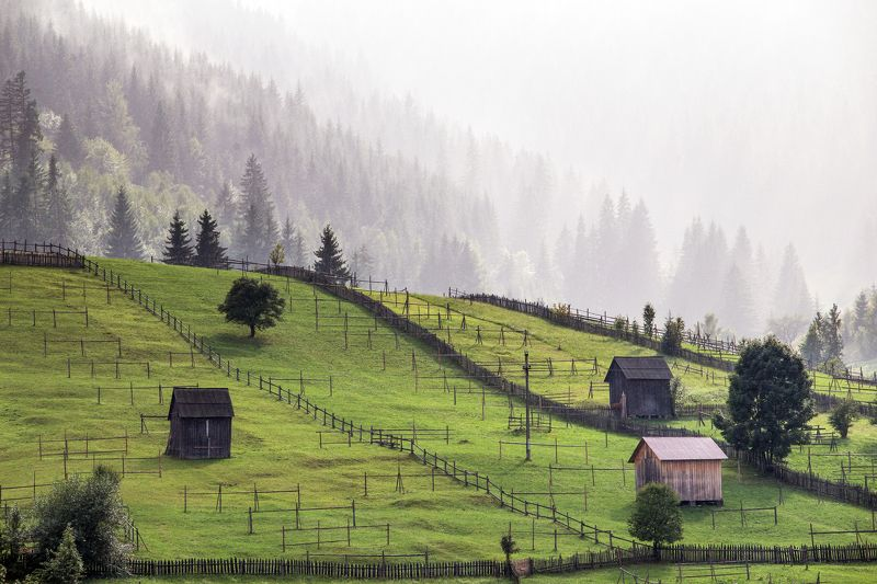 romania,trees,bucovina,land,mist,fog, My beautiful Bucovinaphoto preview