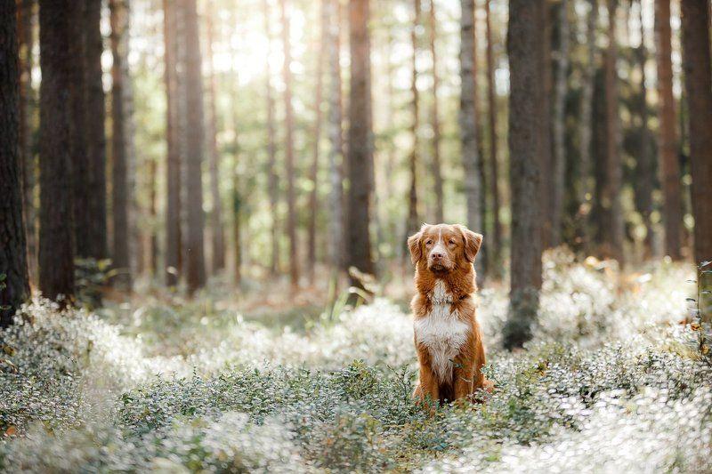 собака, лес, свет, природа в лесуphoto preview