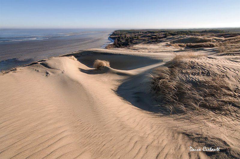 dunes,dead dunes Dune curvesphoto preview