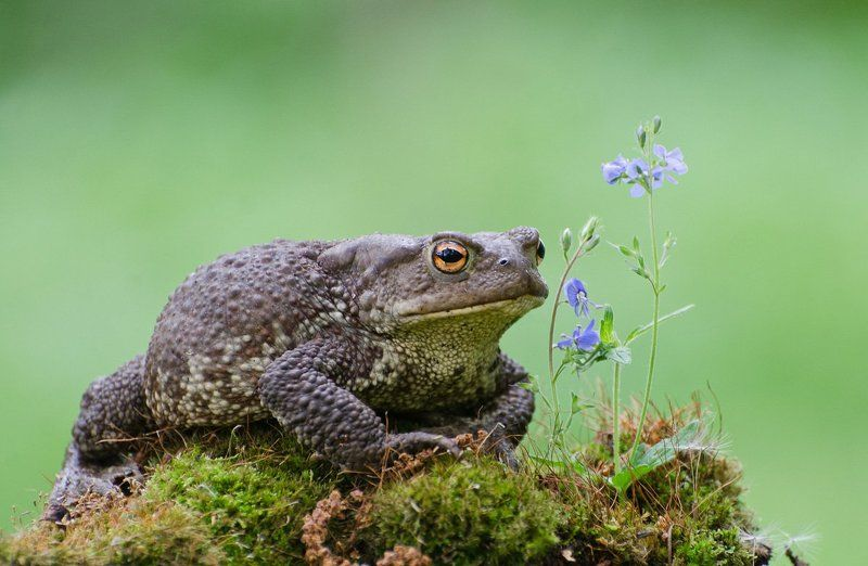 жаба серая Ты натура утончённаяphoto preview