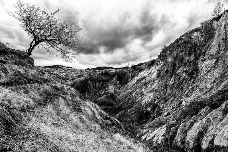 tree, ravine, lonely tree Не сдаваться...photo preview