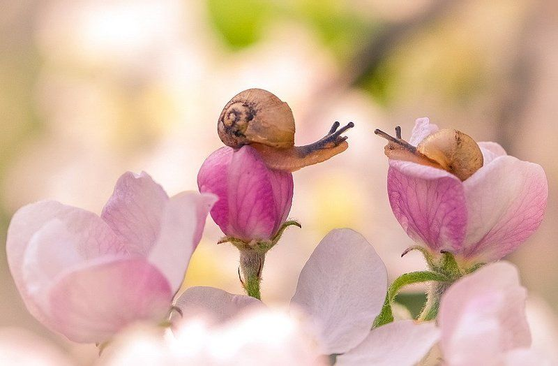 Весна.Любовь.photo preview