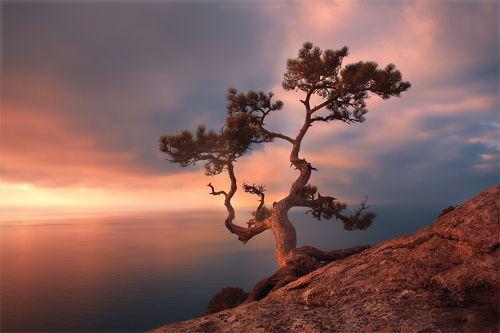 Древо жизни...