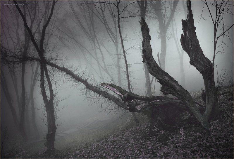 Сказочный лес 11photo preview