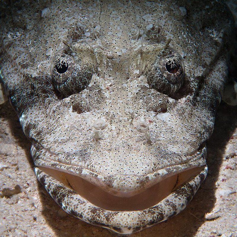 рыба, крокодил, подводная съемка, снут крокодил... ну, рыба-крокодилphoto preview