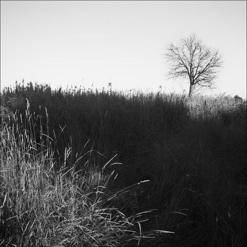 Трава и дерево на месте Воскресенья летним вечеромphoto preview