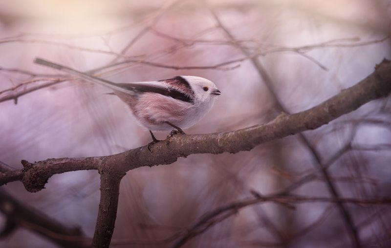 природа, лес, животные, птицы Весенним утромphoto preview