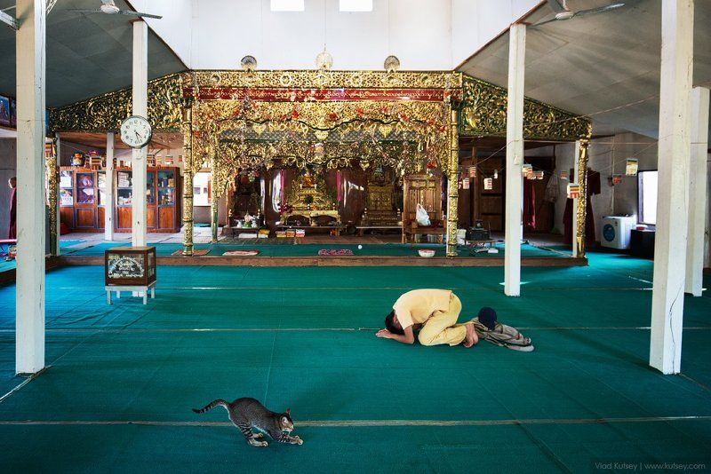 мьянма, бирма, кот, буддизм, монах, монахи, молитва, храм, молящие, ньоншуэ, temple, myanmar, burma, pray, prayers. Время молитвыphoto preview