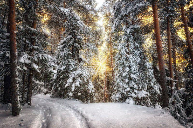 снег, зима, лес, дорога, холод, свет, деревья, пейзаж Там неизведанные чудеса...photo preview