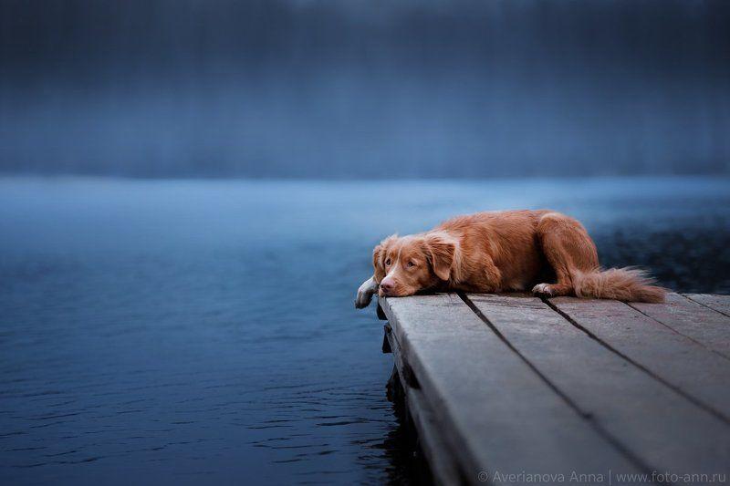 собака, озеро, природа На озереphoto preview