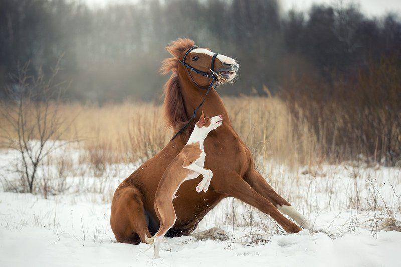 собака, конь, лошадь, зима, рыжие. Мы с тобой одной крови...photo preview