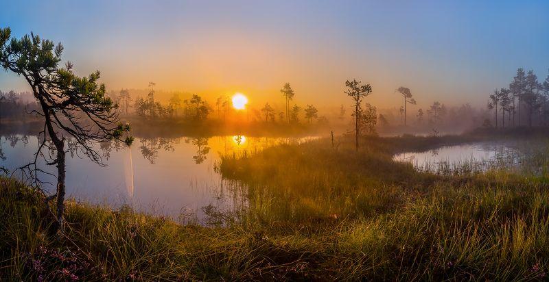 ленинградская область, озеро, болото, сосны, фотопроект, остров, лето, рассвет, туман, солнце Летнее солнце золотое.photo preview