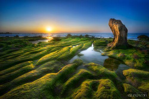 Stone turtle waiting sunrise