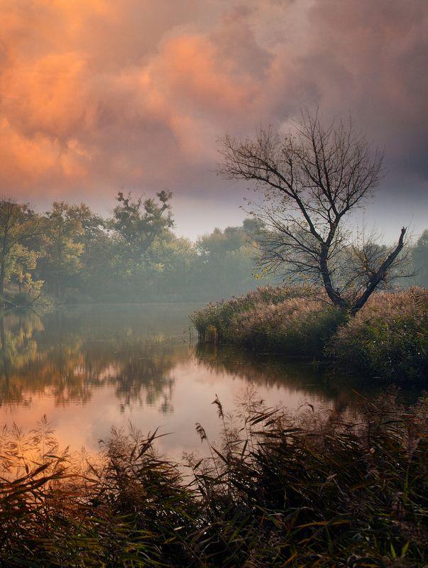 утро,осень,озеро Утро доброе ...photo preview