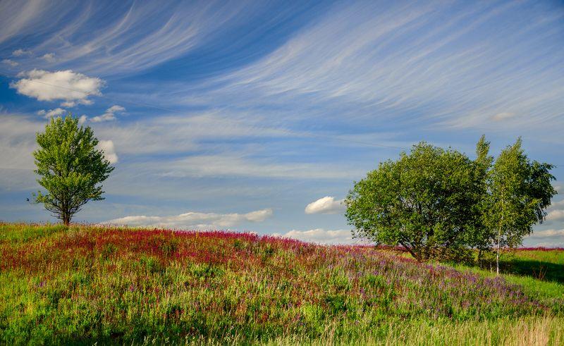 nevant60 березуцкий _александр природа красота пейзаж брянск Причёсанное небо над цветущей смолкойphoto preview