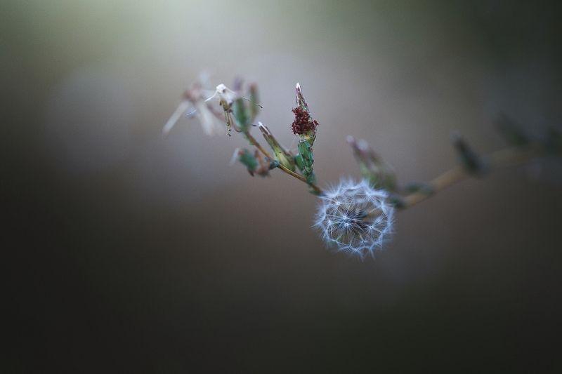 жемчужина,полевые цветы,вечер,тля, Жемчужина. Август СКФО.photo preview