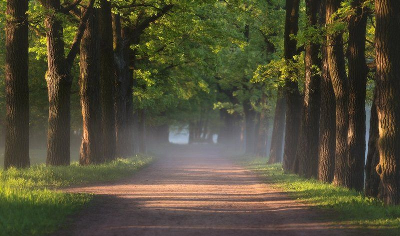 Пушкин, Рассвет, Свет, Туман, Царское, Царскоесело Прогулки поутрУphoto preview